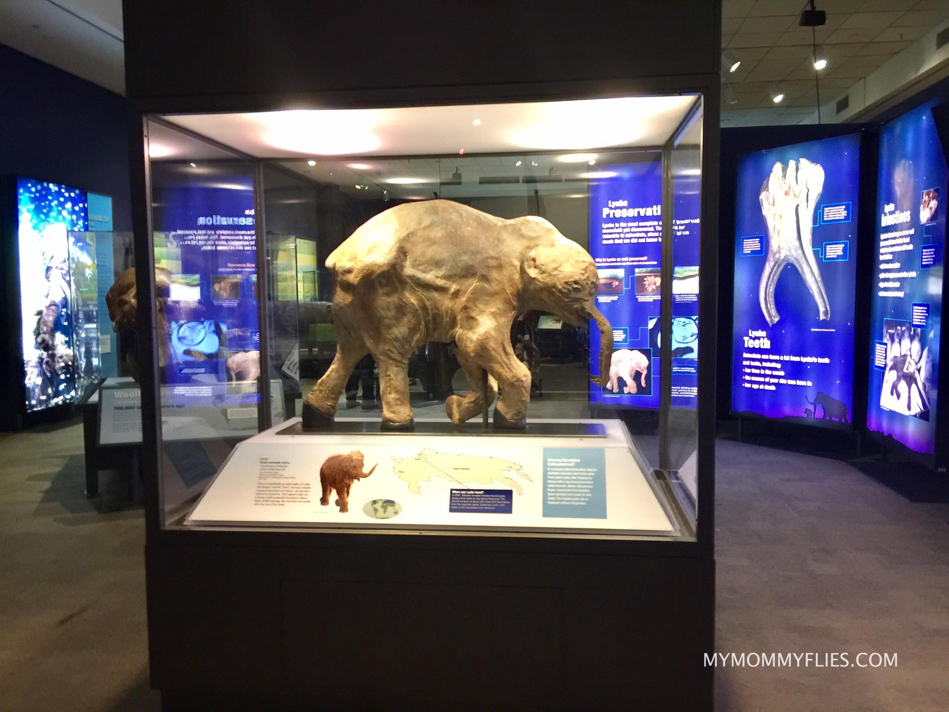 Fernbank_Museum_Mammoths_and_Mastadons