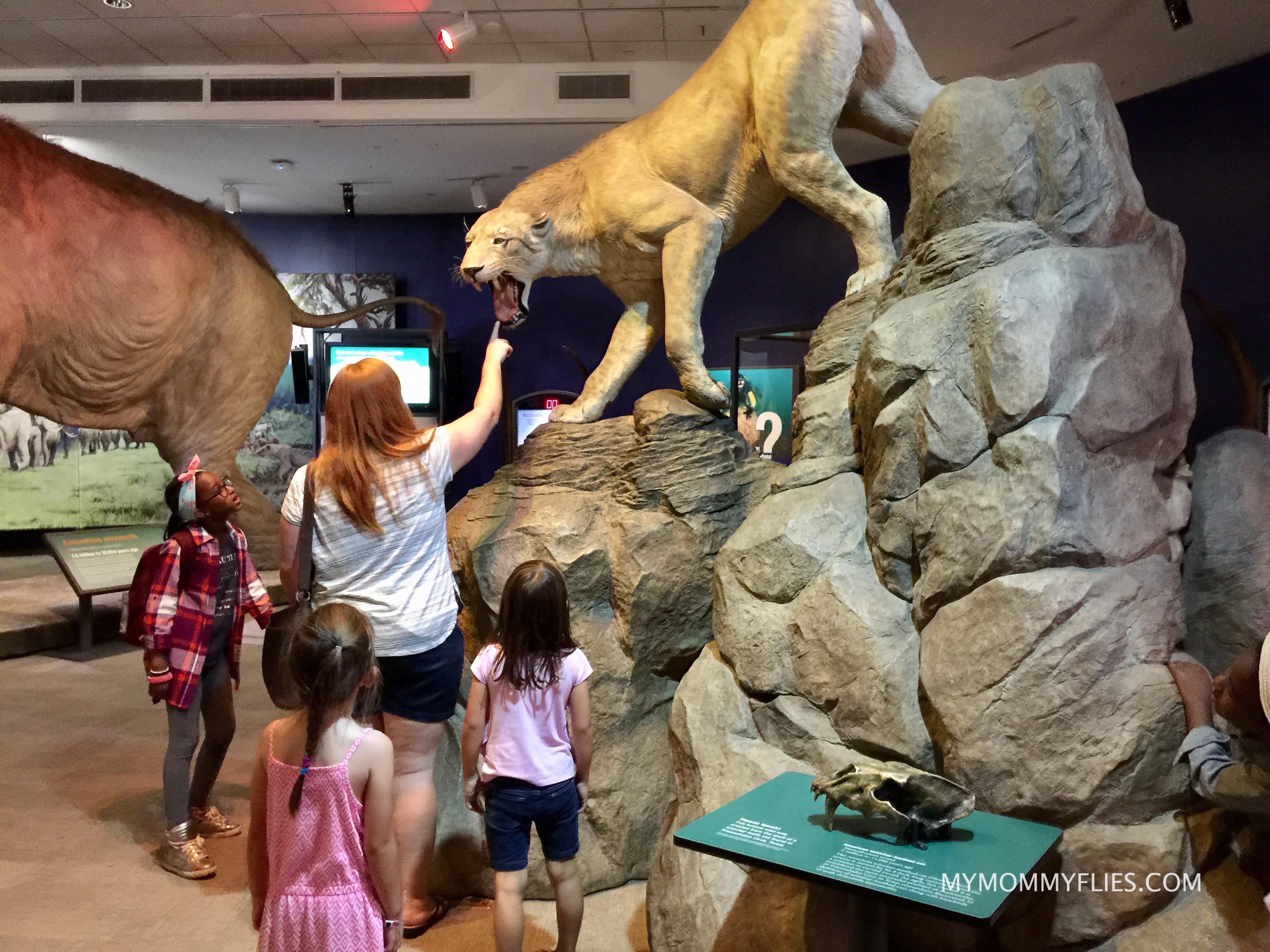 Fernando_Museum_Mammoths_and_Mastodons